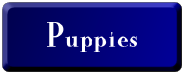 Raklyn Puppies